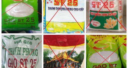 Cách phân biệt gạo ST25 thật và giả
